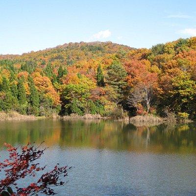 公園内の紅葉風景