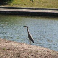 Henderson Creek Wetlands