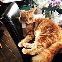 This is Parsley at his one cat cafe in Hope Ktchen in Oban!
