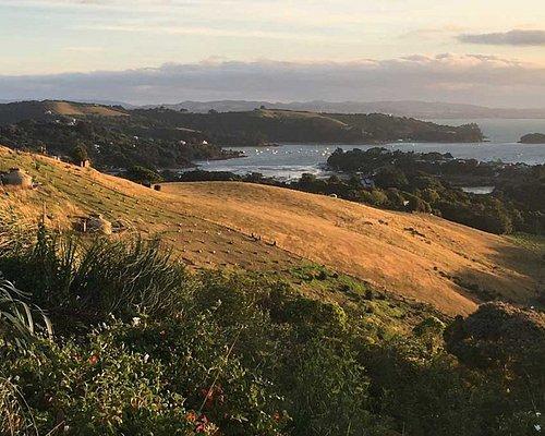Waiheke Island guided walks with Walking By Nature
