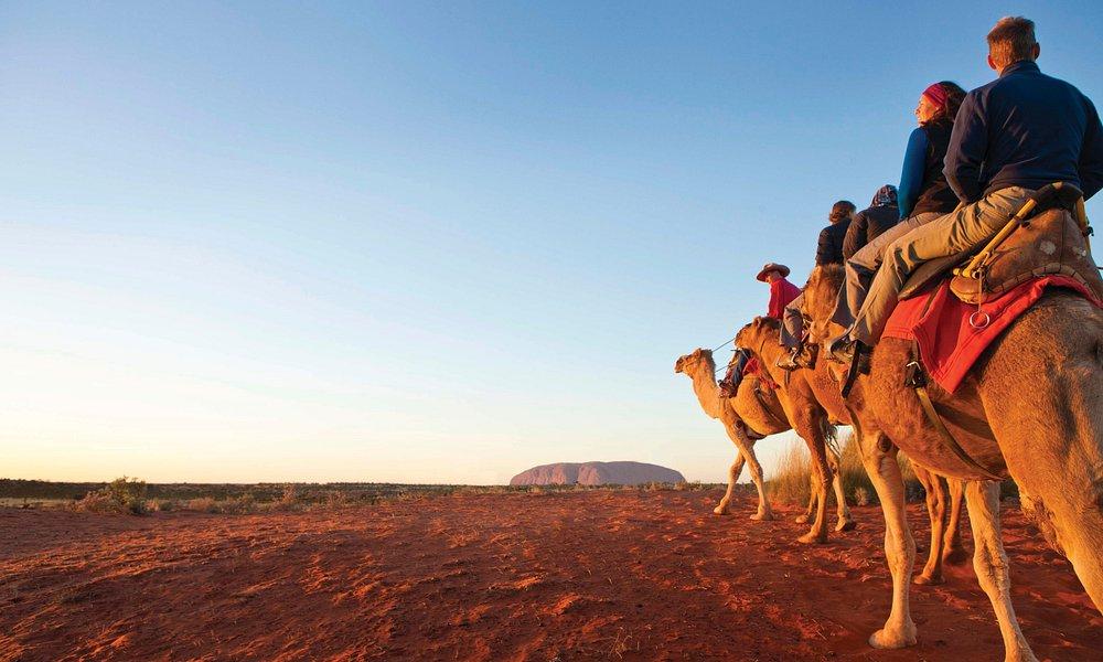 Uluru Camels