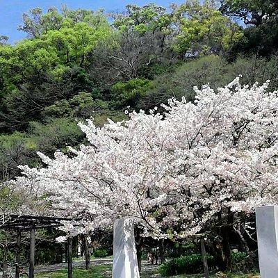 Tokushima Chuo Park