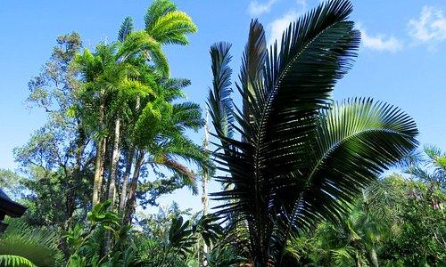 beautiful rain forest setting