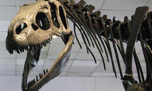Step back in time when Dinosaurs roamed this region.