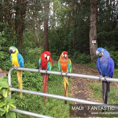 The beauty of Maui - www.mobile.mauifantastictours.com