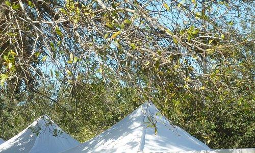 Palm Beach Gardens GreenMarket