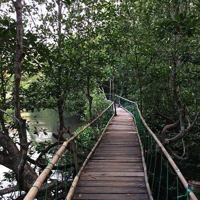 kondisi mangrove yang masih baik
