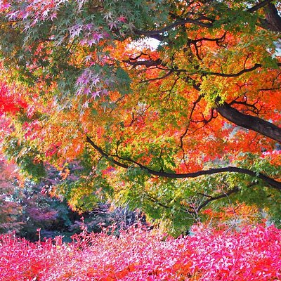桜丘すみれば自然庭園の紅葉 世田谷区桜丘4丁目23−12