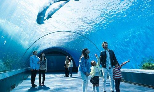 自然の光がふりそそぎ、青い海と白い砂地でたわむれるイルカを楽しめる「ドルフィンファンタジー」