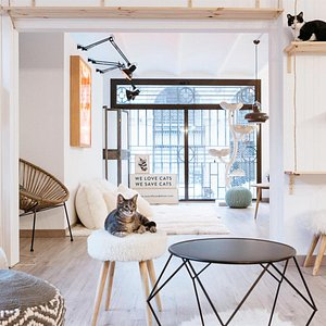 Espacio Cat House