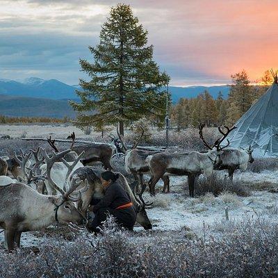Tsaatan reindeer herder family in Northern Mongolia