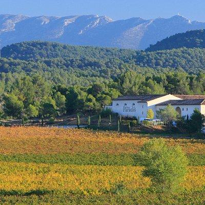 Le Vignoble du Château Paradis