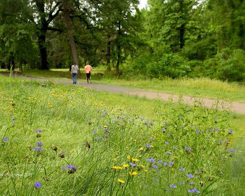 Wildflowers along the Nix Creek Trail