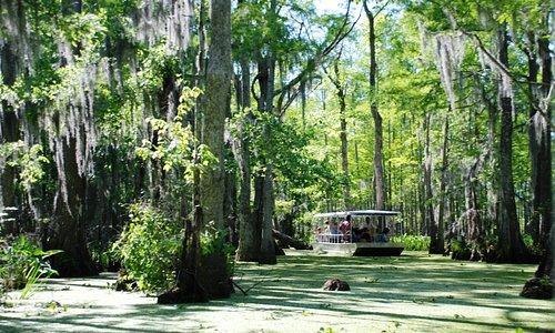 Honey Island Swamp tour boat
