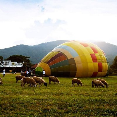 We are extremely delighted to present our activity tethered balloon riding over the green fields