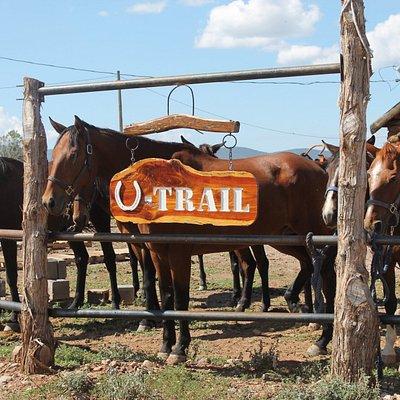 Welcome to U Trail!