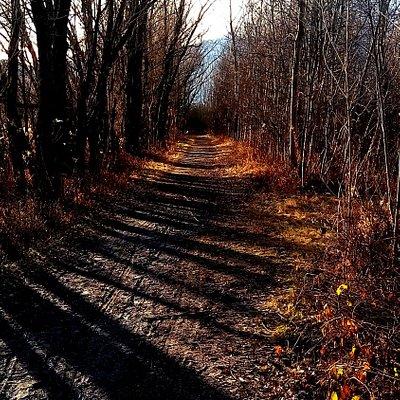 Sentiero che porta al lago