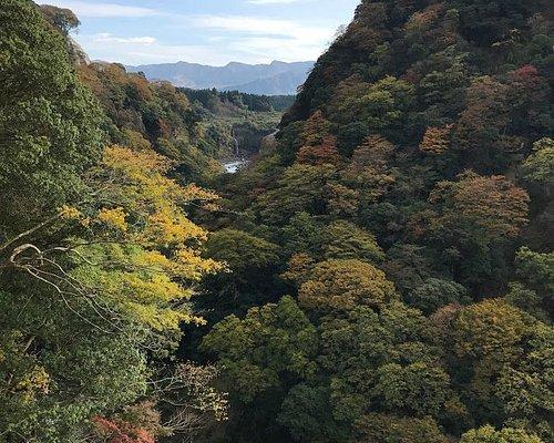 長陽大橋の向こうは、阿蘇北谷広葉樹の原始林の紅葉の始まり