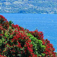 A view over Lake Taupo from the gardens