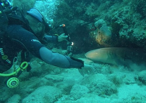 This is photo from our very last shark encounter. You can find more photo & video on our website