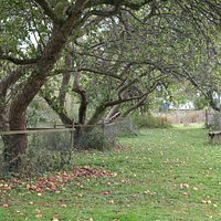 Tewin Orchard