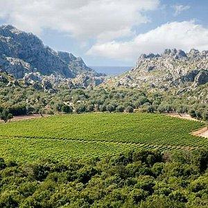 Vinyes Mortitx, un vino de altura.
