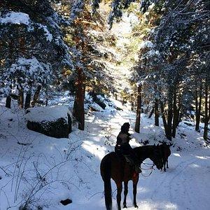 horse riding trails in madrid mountain .Horse riding.Excursión a caballo por la sierra de Madrid