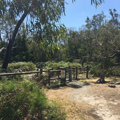 Colley st Bushland Reserve