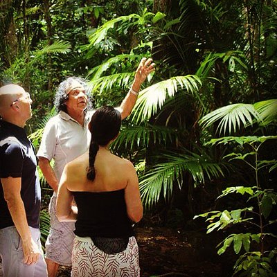 Learning about the Daintree Rainforest