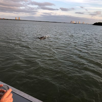 Saw some playful dolphins and a gorgeous sunset on our sunset cruise earlier this week. Thorough