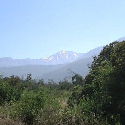 Bosque Panul y nevado al fondo, en Santiago, Chile.