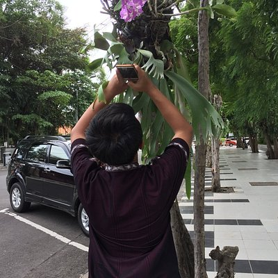 my boy take a orchid picture