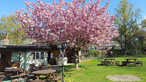 Clubhouse & BBQ in the shade of our cherished Cherry tree.