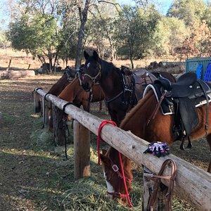 Willow Creek Riding Center