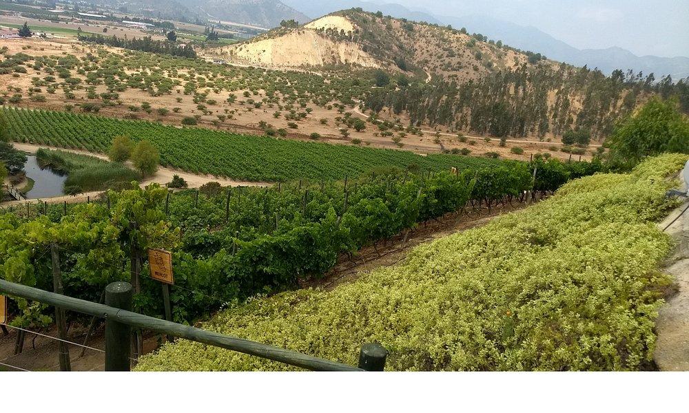 Valle de Casablanca, ruta del vino