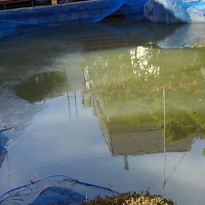 凍り付いた釣り堀