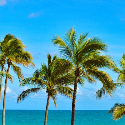 palm trees and ocean