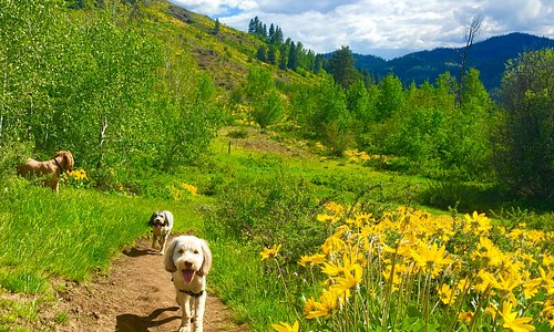 Off leash trails for hiking in spring!