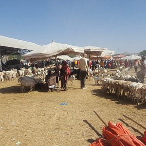 At the camel/livestock market in Hargeisa