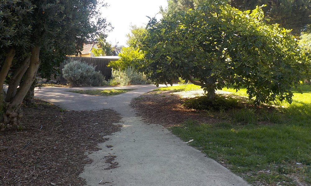 Pathway through food forest