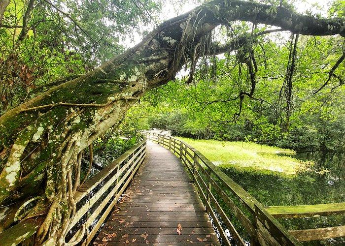 Beautiful bent tree along the lakes