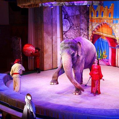 Игра в мячик со слоном