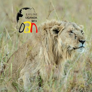 Game drive in Kidepo Valley National park (Lion)
