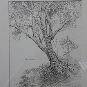 """Pencil drawing from the exhibition """"For the Love of the Trees"""""""