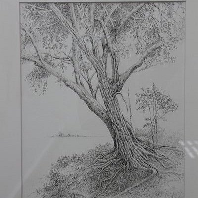 "Pencil drawing from the exhibition ""For the Love of the Trees"""