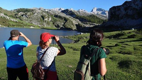 Avistamiento de aves en los lagos de Covadonga.