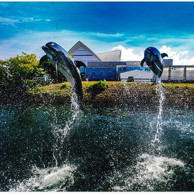 水族館の外にあり、錦江湾とつながるイルカ水路では、 自然に近いイルカの様子を紹介しています。 イベント「青空イルカウォッチング」では、イルカの トレーニングの様子をご覧になれます。