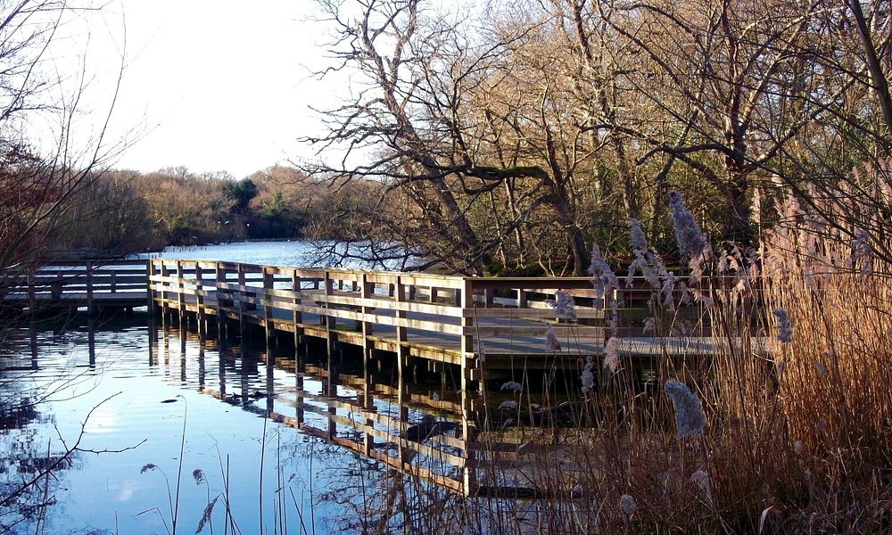 View of Connaught Water, on the outskirts of Epping Forest