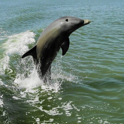 We see dolphins an most every Everglades National Park Dolphin, Birding and Wildlife Photo Tour
