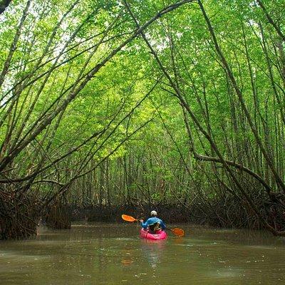 First Level Kayaking Trip